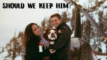 Meet The Flying Dog Vancouver Heli Adventure