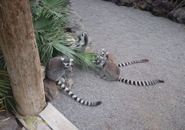 Meet lot's of Interesting animals at Jungle Park on Tenerife