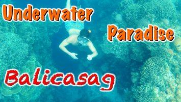 Philippines Little Secret Island Bohol Balicasag Diving Snorkeling Haven