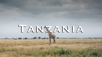 Great Africa Safari In Tanzania Tarangire National Park