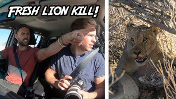 SPOTTING LIONS On Our AFRICAN SAFARI Etosha Namibia Exploring With Cody